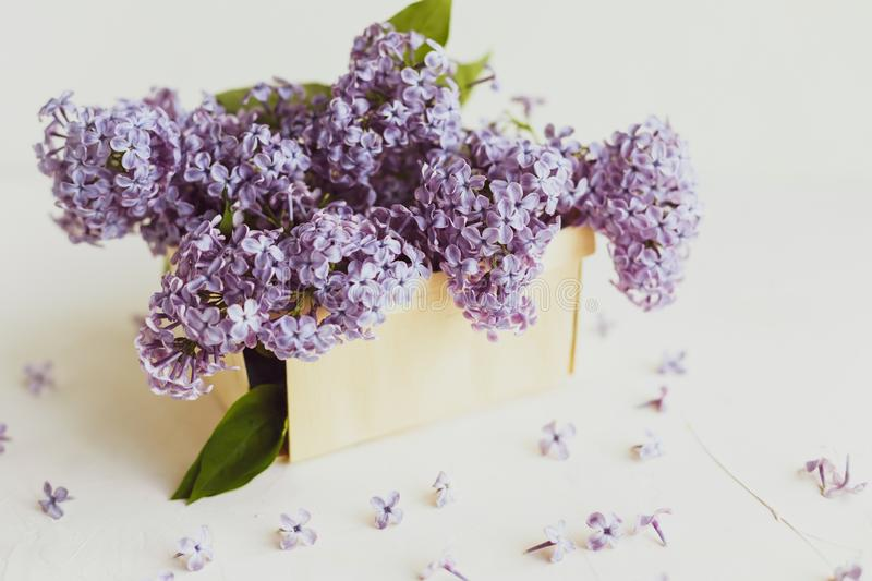 Purple spring lilac flowers still life on white. Background in the morning. Purple lilac in a wooden box royalty free stock photos
