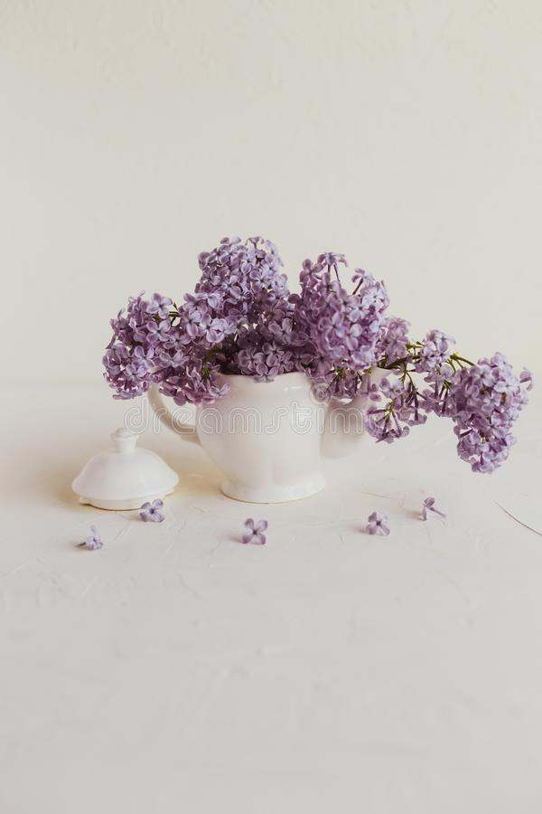 Purple spring lilac flowers still life on white. Background in the morning. Small tea pot and a cup are full of purple flowers royalty free stock image
