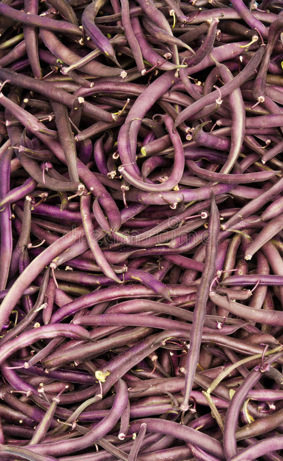 Download Purple String Beans On Display Stock Photo - Image: 20633474