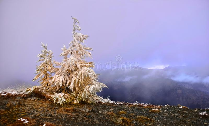 Purple sunrise in North Cascades. Christmas background. Pasayten Wilderness near Winthrop. Part of Pacific Crest Trail. Washington. United States royalty free stock photo