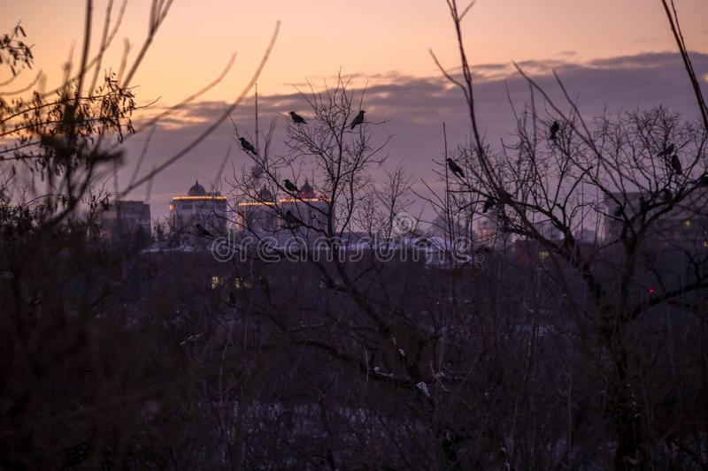 Purple Sunset in the City. A purple sunset in the city, crows sit on trees. Cold season, winter beauty, branches. Houses on the background royalty free stock image