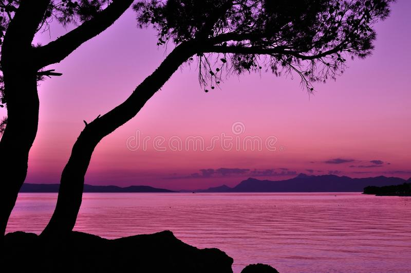 Purple sunset with tree silhouette at sea in summe. Purple sunset with tree silhouette at adriatic sea in summer. Podgora, Croatia stock images
