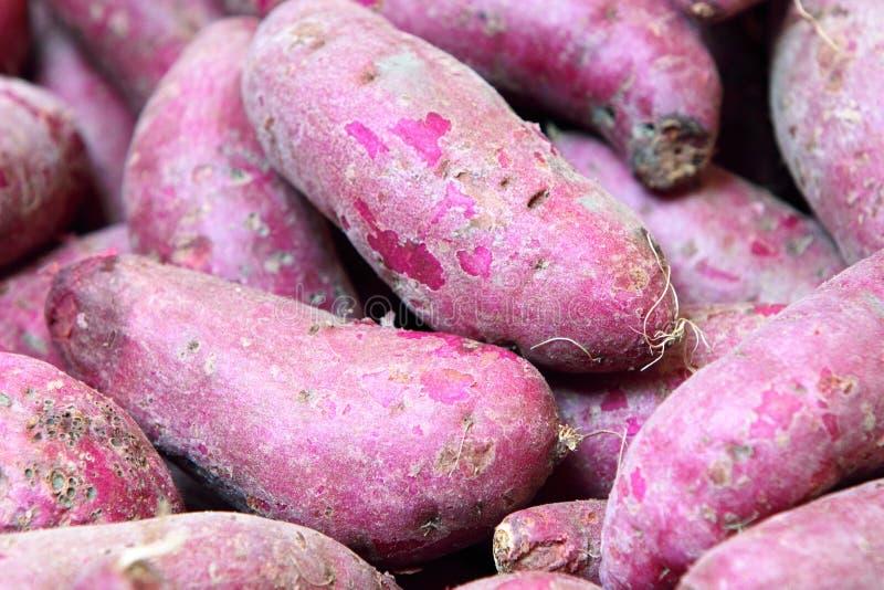 Purple Sweet Potato. Closeup shot of Purple Sweet Potato royalty free stock photo