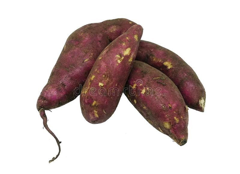 Purple sweet potato isolated on white background. Purple sweet potato, large, starchy, sweet-tasting, tuberous roots and a root vegetable, isolated on white royalty free stock photography