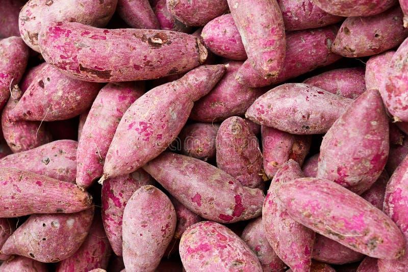 Purple Sweet Potato. Open-air market sale Purple Sweet Potato stock photos