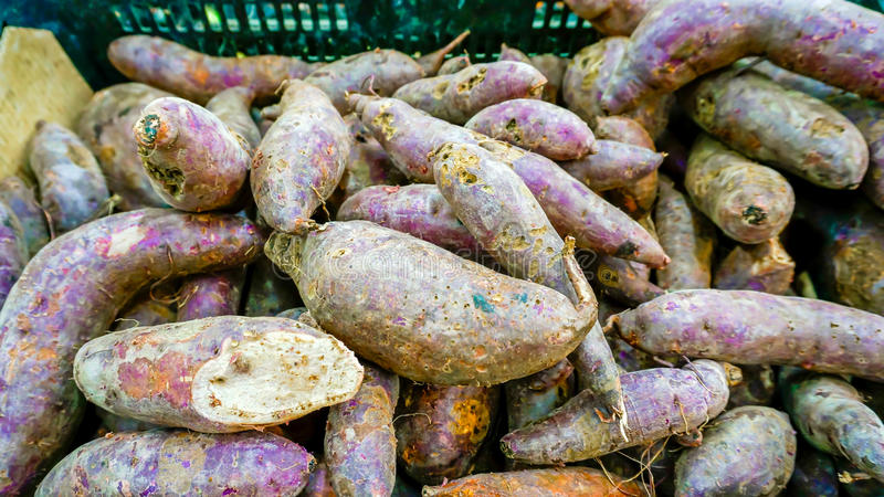 Download Purple sweet potato stock image. Image of natural, mature - 39508753