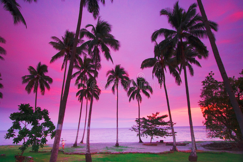 Download Purple tropical sunset stock photo. Image of coco, escape - 2903706