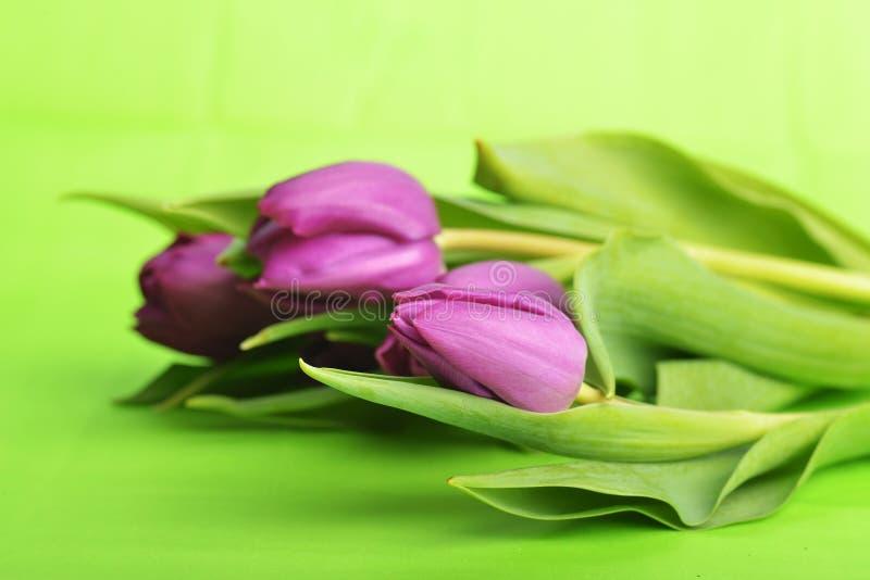 Purple tulips royalty free stock photos