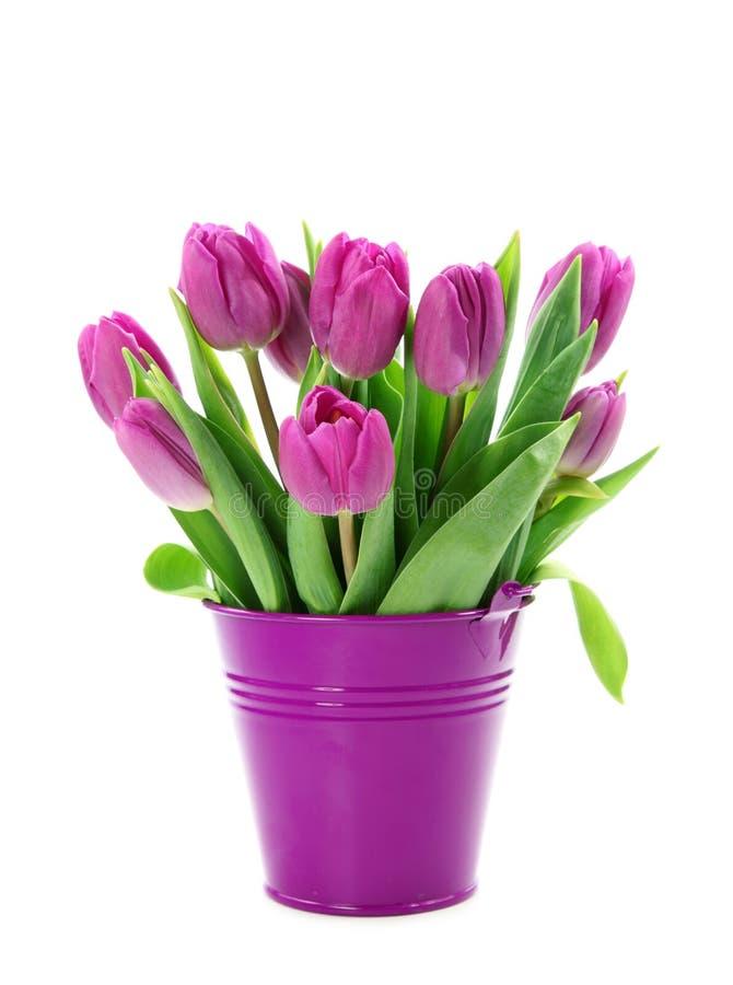 Purple tulips in bucket stock images