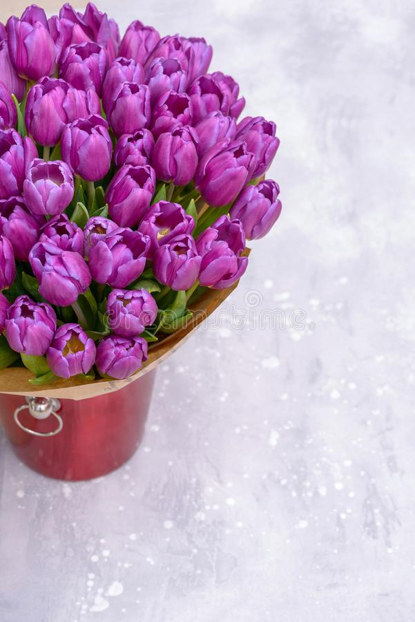 Purple tulips in bucket on gray background stock photo