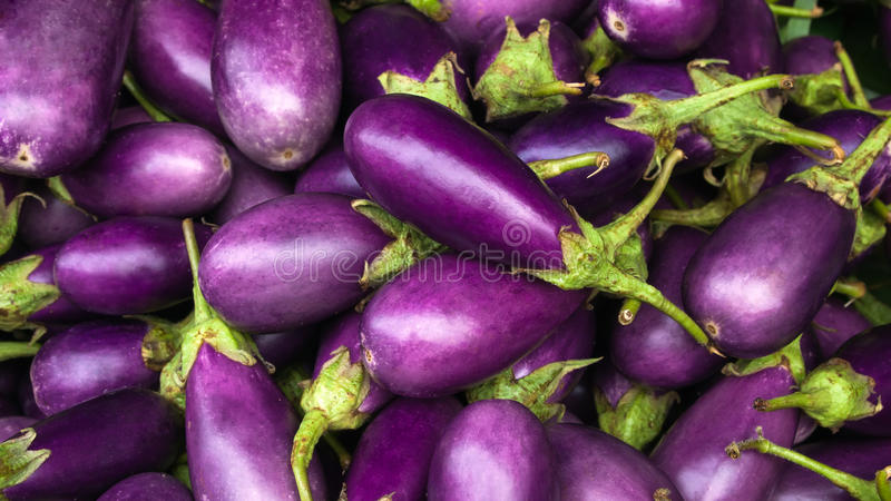 Purple van de aubergine royalty-vrije stock foto