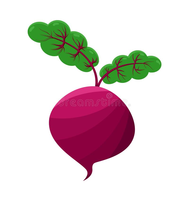 Purple Vector Beet Isolated on White Background royalty free illustration