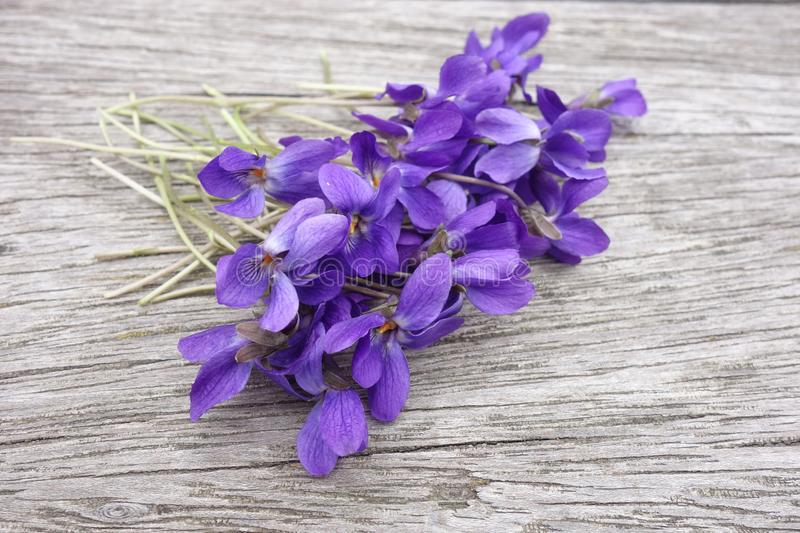 Violets on wooden board royalty free stock photos