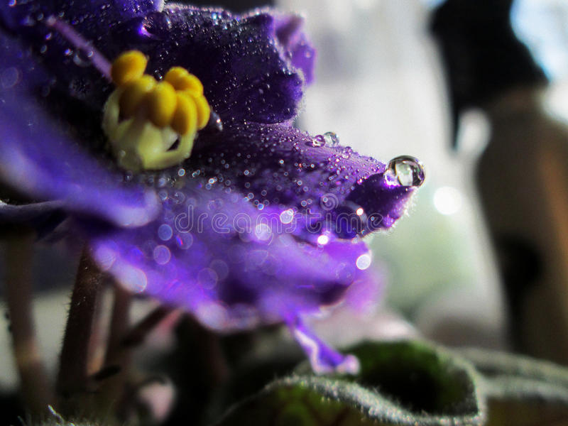Purple Violet stock photos
