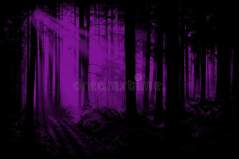 Purple, Violet Woods, Forest Background. Surreal soft scene of a woods or forest. The woodland landscape scene is done in a purple or violet color. Make for a stock photos