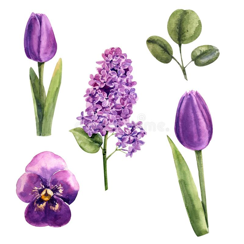 Free Purple Watercolor Flower Set With Tulips Stock Photo - 131734390