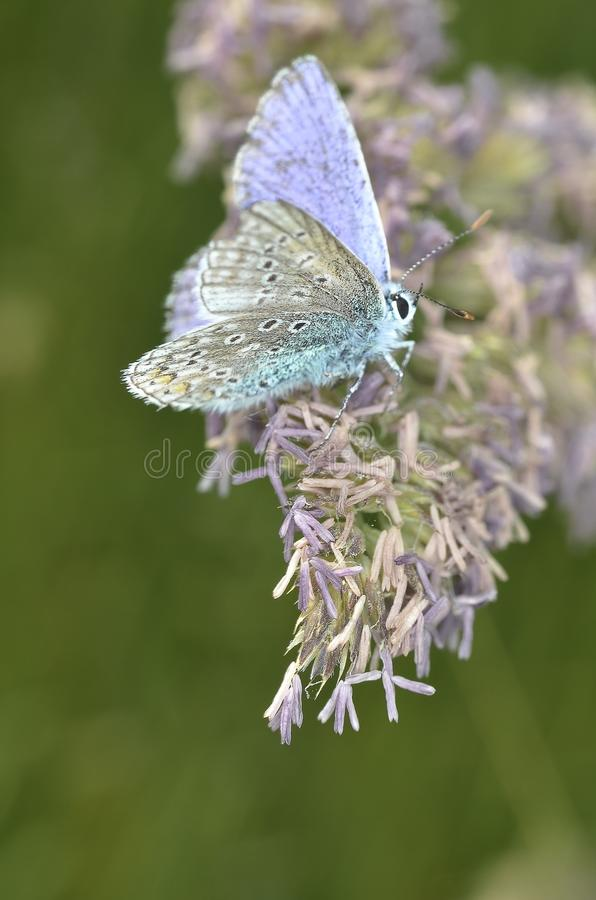 Purple White Butterfly on Purple Petaled Flower during Daytime stock image