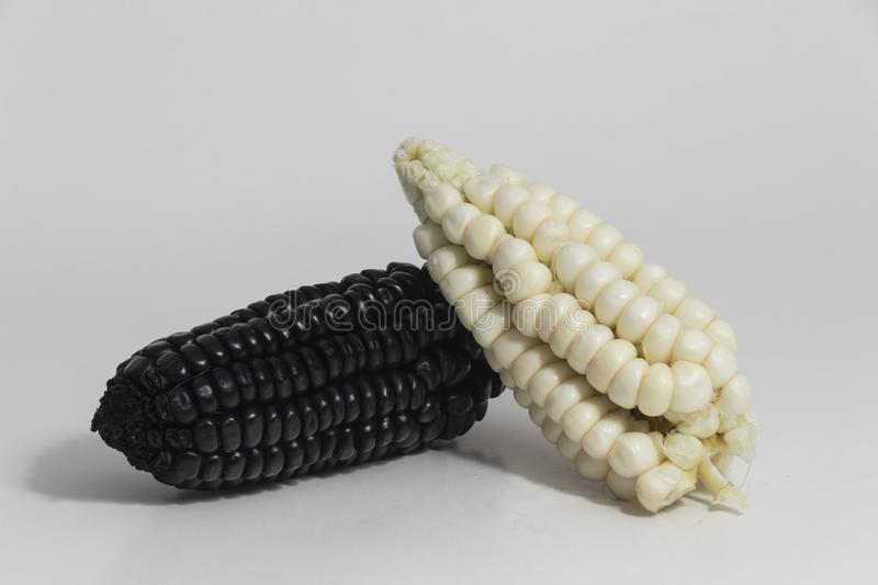 Purple and white corn still life. Purple corn is a typical ingredient of Peruvian food. When boiled in water, it produces a purple liquid rich in starch, which stock photo