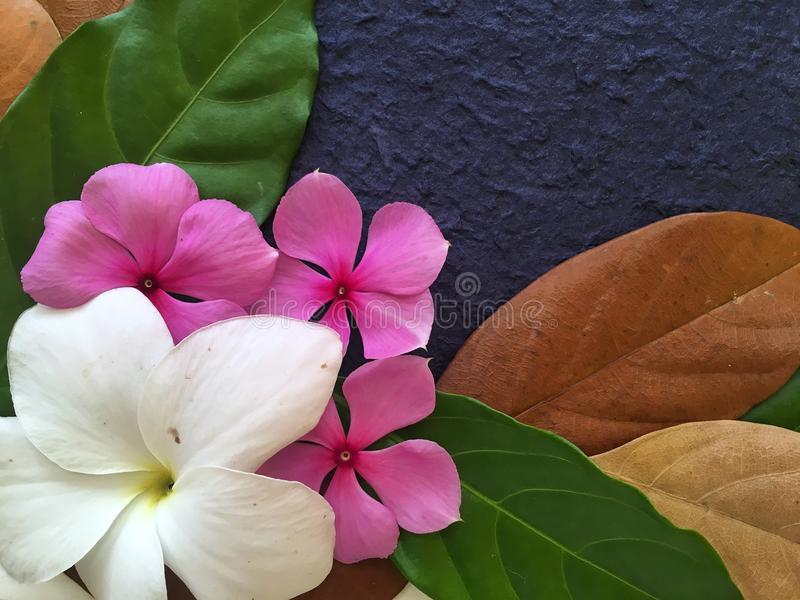 The purple and white flowers decoration with the green and brown download the purple and white flowers decoration with the green and brown leaves stock image mightylinksfo