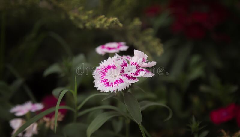 Purple And White Flowers In Tilt Shift Lens Free Public Domain Cc0 Image