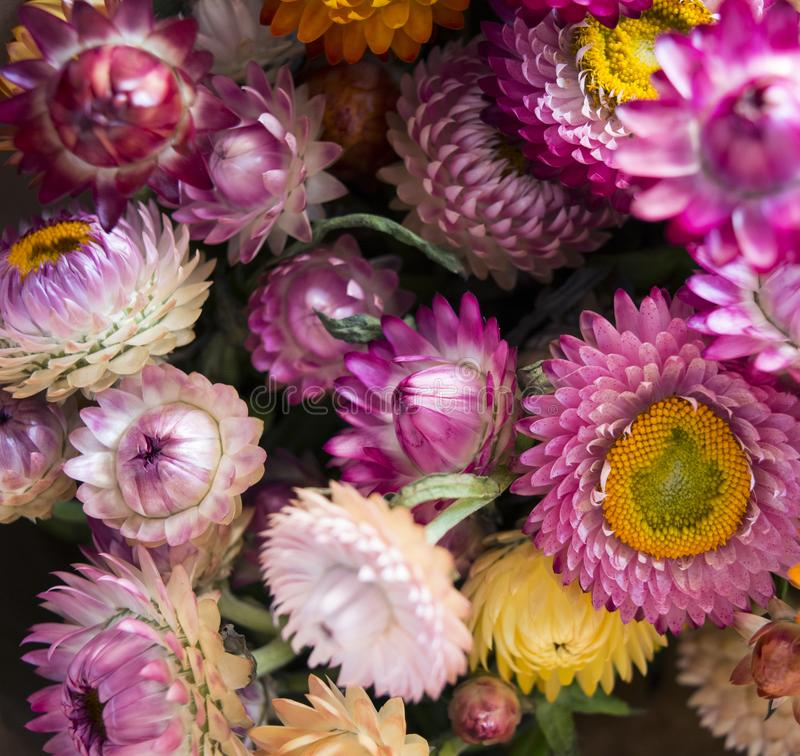 Purple and White Multi-petaled Flower Lot Closeup Photography stock photo