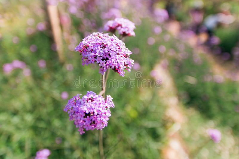 Purple wild flower stock images