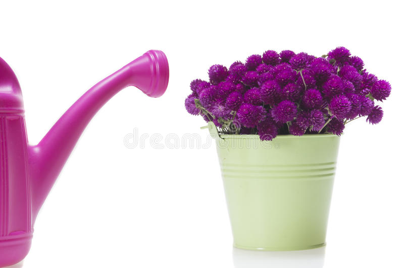 Purple wild flowers in bucket or water can stock photos