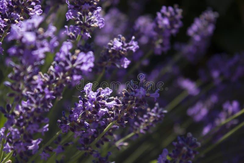 Download Purple wild flowers stock photo. Image of outdoors, macro - 83708286