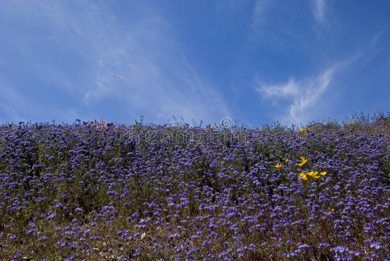 Download Purple Wildflower Fields stock photo. Image of climate - 13867938