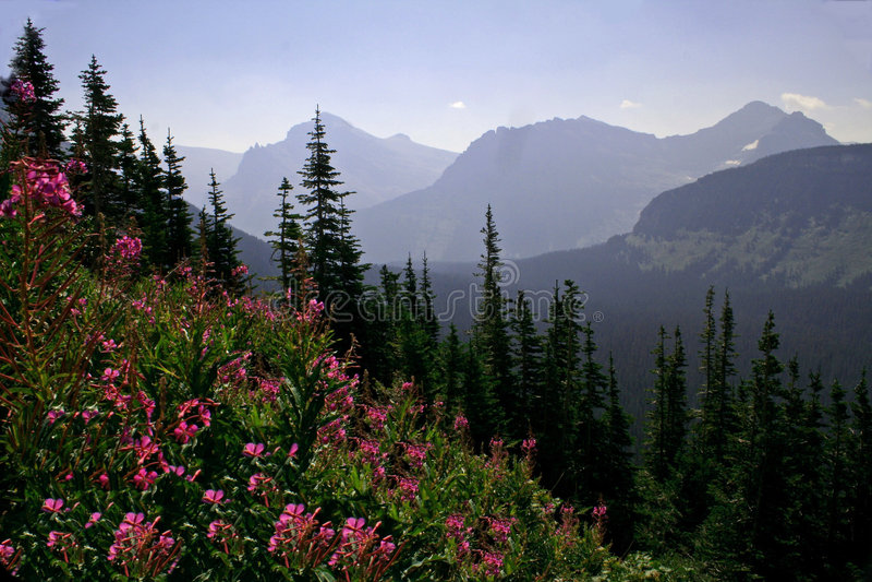Purple wildflower mountain landscape royalty free stock image