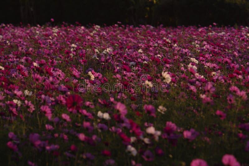 Purple Wildflowers Free Public Domain Cc0 Image
