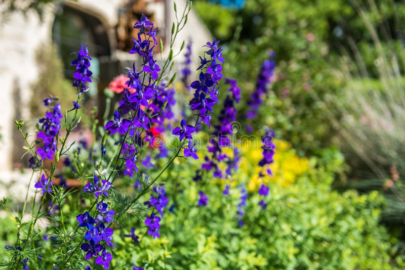Purple wildflowers in Garden. With diffuse background of greens and yellow. Blurry stone building in the background stock photo