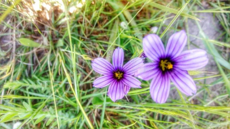 Purple Flowers stock photos