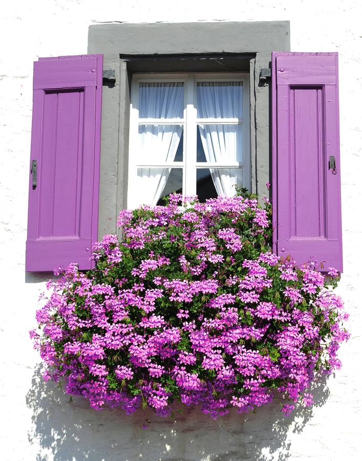 Free Purple Window With A Flowers. Royalty Free Stock Images - 111529169