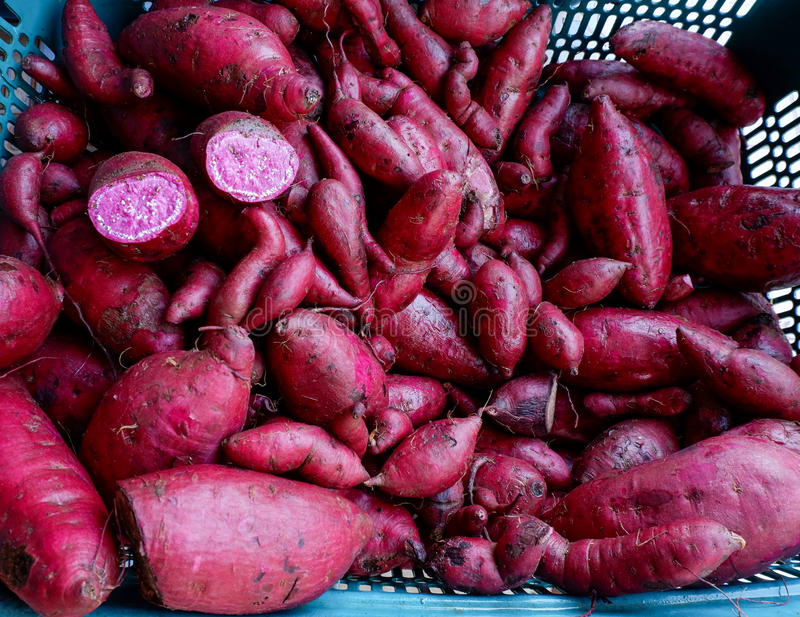 purple Yam sweet potato royalty free stock image