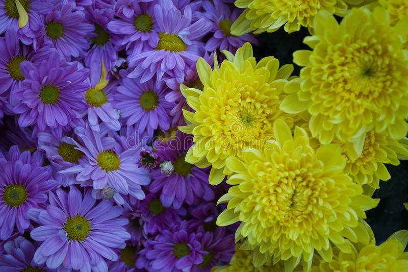 Purple and yellow flowers. This is up close with purple and yellow flowers in a botanical garden stock photos