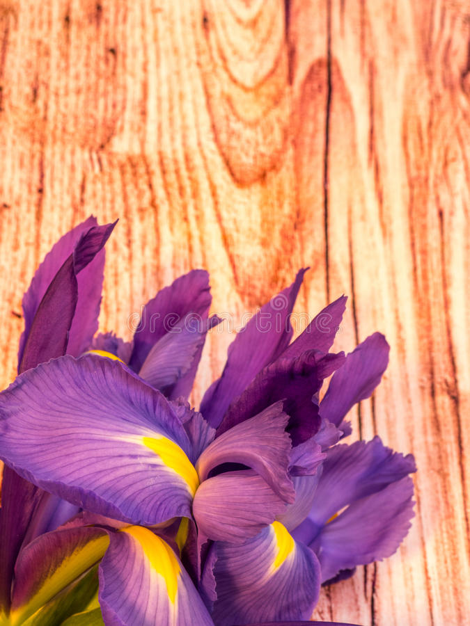 Purple and yellow iris with copy space on wood planks. Bunch of iris on wooden background, portrait orientation royalty free stock photos
