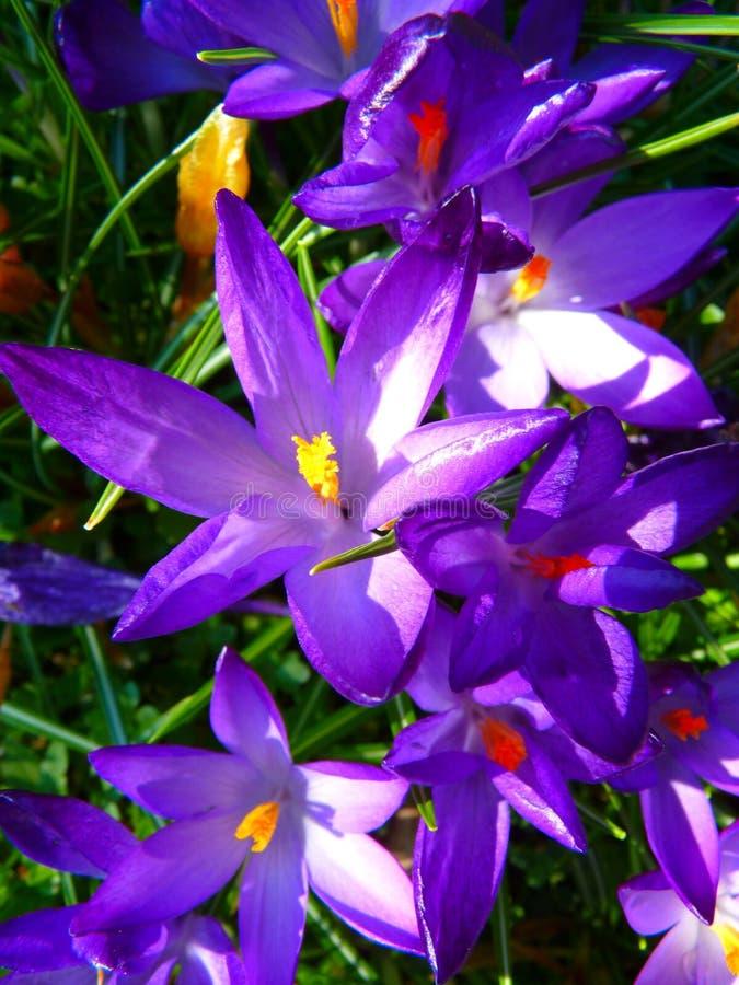Purple Yellow Petaled Flowers stock photo