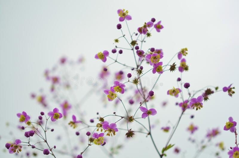 Purple And Yellow Wildflowers Free Public Domain Cc0 Image