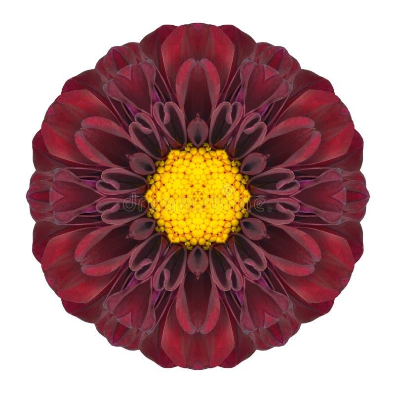 PurpleDahlia Mandala Flower Kaleidoscopic Isolated på vit royaltyfria bilder
