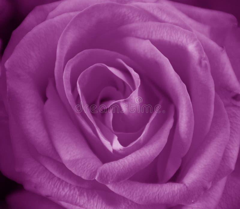 purplen steg fotografering för bildbyråer