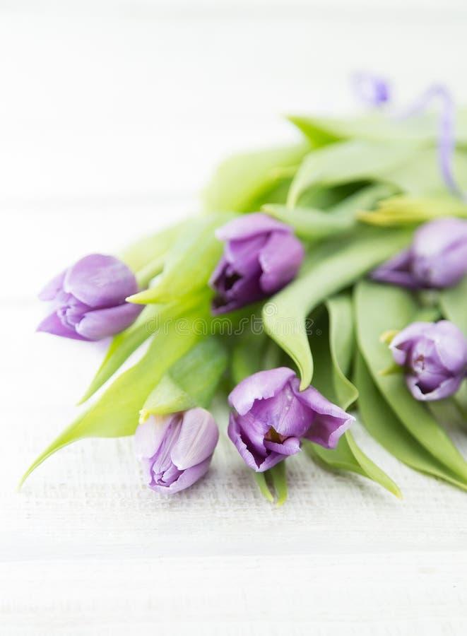 purpleviolet郁金香花束在白色土气木backgrou的 库存照片