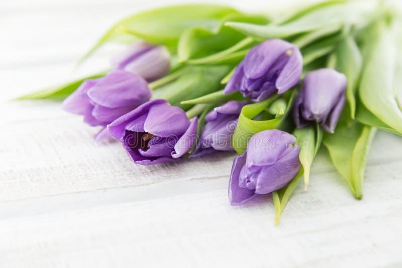 purpleviolet郁金香花束在白色土气木backgrou的 免版税库存照片