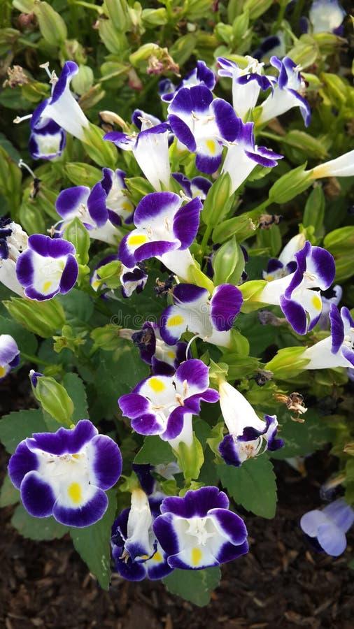 Purplish цветки стоковое изображение