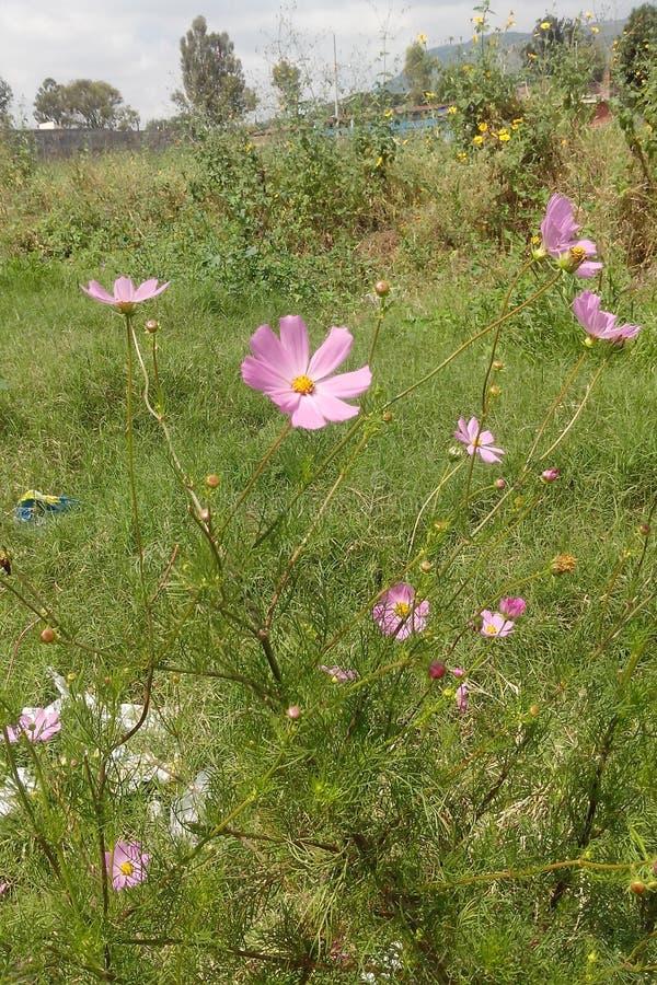Purpple kwiaty zdjęcie royalty free