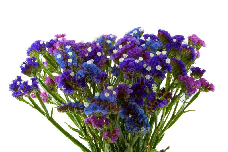 purpur staticeviolet för blå bukett royaltyfria foton