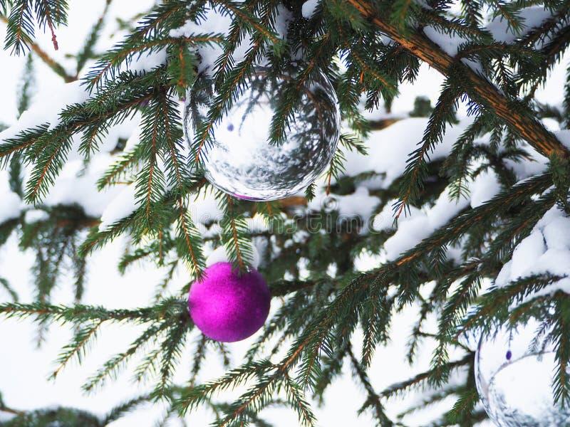 Purpur- und Weihnachtsbälle auf einem Straßenbaum unter dem Schnee stockfoto