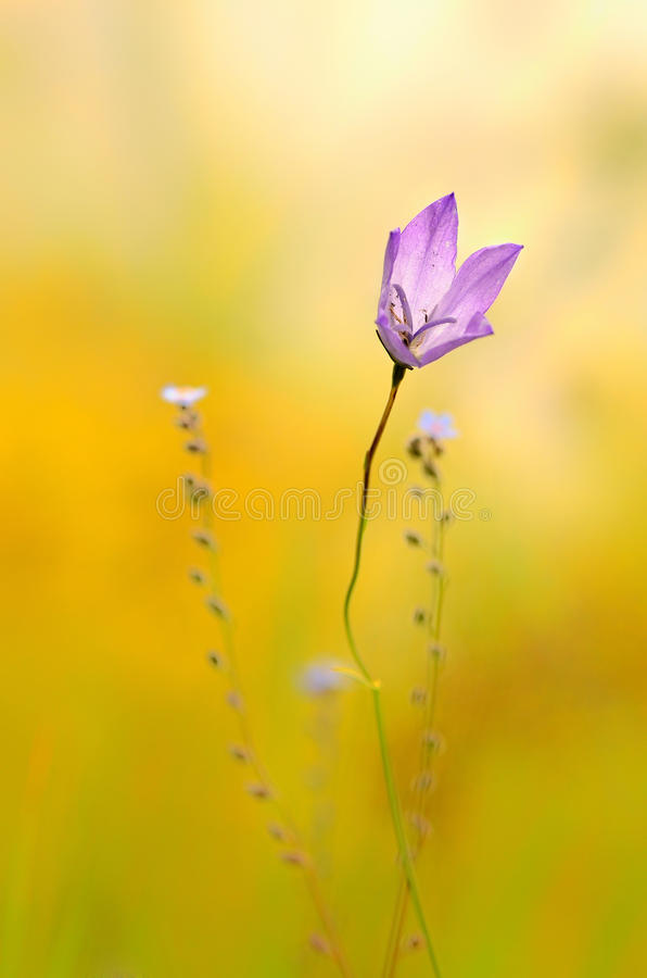 Purpur wild blomma royaltyfri fotografi