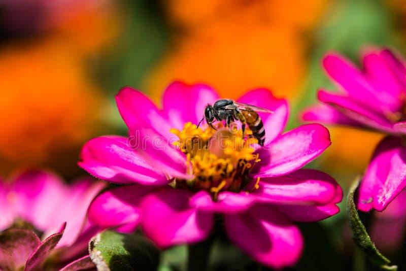 Purpura kwiat obrazy royalty free