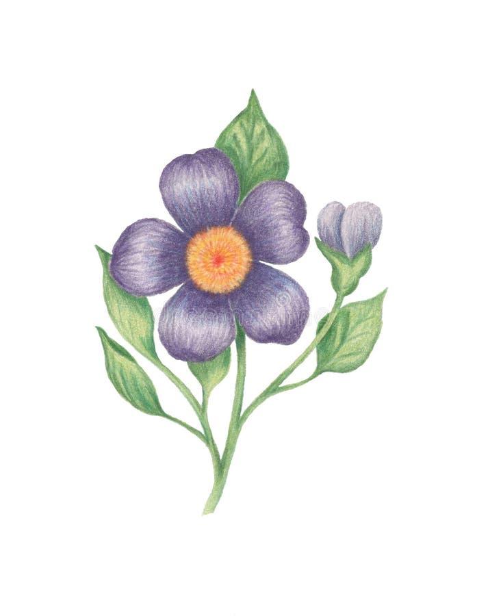Purpura kwiat na białym tle ilustracja wektor